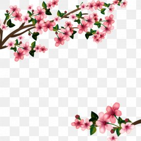 Vector Cherry Blossom - Cherry Blossom Euclidean Vector PNG