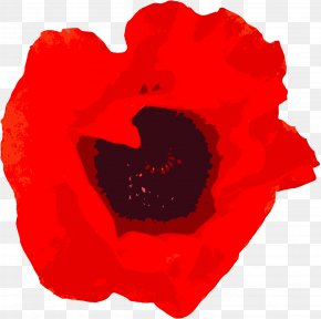 Background Rose - Garden Roses Remembrance Poppy Military PNG