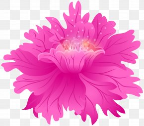 Aster Cut Flowers - Pink Flower China Aster Petal Plant PNG