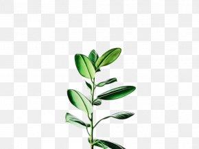 Plant Stem Tree - Plant Flower Leaf Flowering Plant Branch PNG