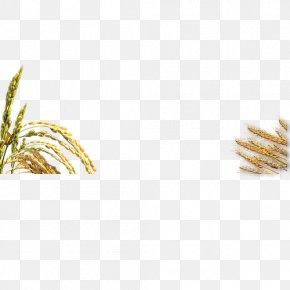Golden Rice Tao Heung - Rice Tao Heung Holdings Limited Pattern PNG
