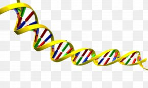 Dna Helix Clipart - DNA Nucleic Acid Double Helix Clip Art PNG