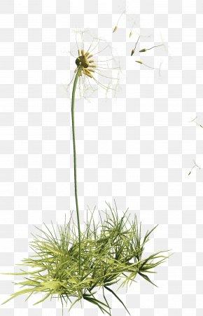 Dandelion - Flower Dandelion Plant Clip Art PNG