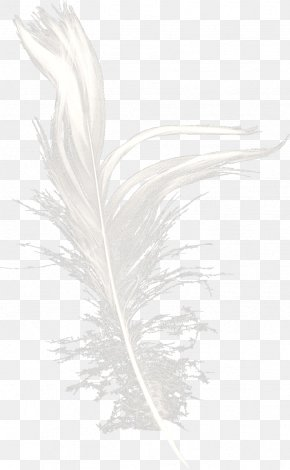 White Feather Dream - White Feather Black Pattern PNG