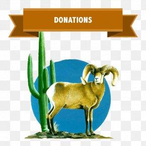 Goat - Goat Desert Bighorn Sheep Argali PNG