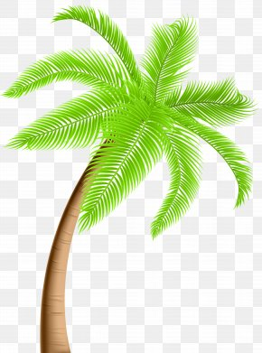 Palm Tree Clip Art - Tree Arecaceae Clip Art PNG