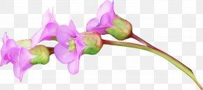 Floral Decoration Pattern - Flower Pink Petal Rose PNG