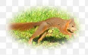 Pas De Deux - Fox Squirrel Chipmunk Terrestrial Animal Wildlife PNG