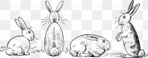 Bunny Rabbit - Draw 50 Animals Drawing Made Easy: A Helpful Book For Young Artists; The Way To Begin And Finish Your Sketches Clearly Shown Step By Step White Rabbit Clip Art PNG
