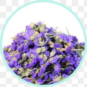Chamomile - English Lavender Flowering Tea Chamomile Calendula Officinalis PNG