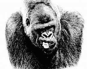 Gorilla - Common Chimpanzee Primate Western Lowland Gorilla Drawing PNG