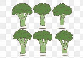 Green Broccoli - Euclidean Vector Broccoli Illustration PNG