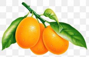 Orange - Fruit Orange Desktop Wallpaper PNG