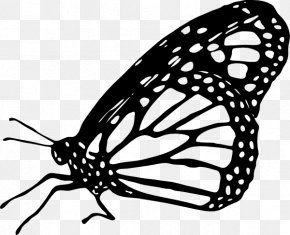 Monarch Butterfly Clipart - Monarch Butterfly Drawing Clip Art PNG
