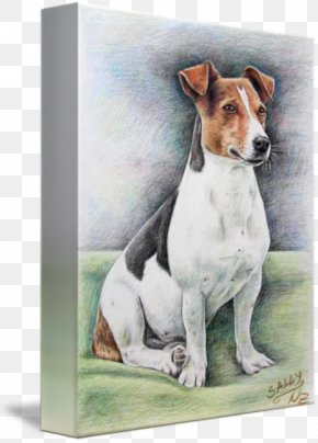 Jack Russell - Jack Russell Terrier Dog Breed English Foxhound Puppy Companion Dog PNG
