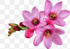 Flower - Flower Computer Graphics Desktop Wallpaper Clip Art PNG