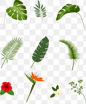 Vector Hand-painted Leaves - Leaf Tropics Plant Euclidean Vector PNG