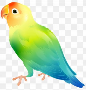Parrot Bird Clip Art Image - Lovebird Parrot Clip Art PNG