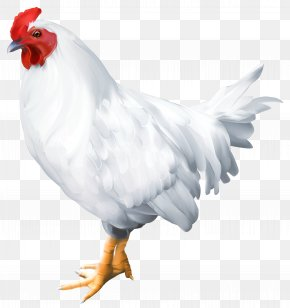 White Rooster Clip Art Image - Solid White Bird Rooster Poultry PNG