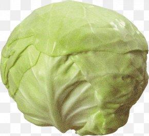 Sauerkraut Brussels Sprout - Cauliflower PNG
