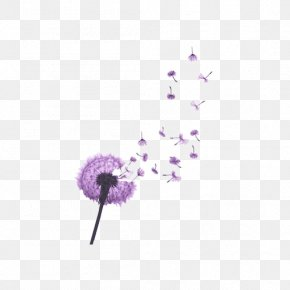 Purple Dandelion PNG