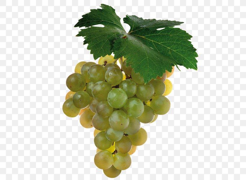 Juice Cabernet Sauvignon Shiraz Wine Grape, PNG, 600x600px, Juice, Berry, Cabernet Sauvignon, Common Grape Vine, Food Download Free