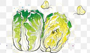Cartoon Painted Fresh Cabbage - Chinese Cabbage Vegetable PNG