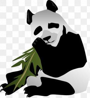 Giant Panda - Bear Giant Panda Dog Mammal Carnivora PNG