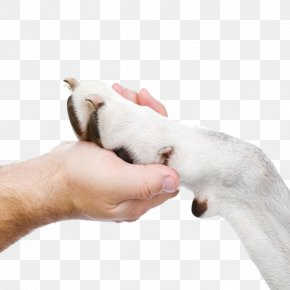 Holding Dog Paw - Puppy Dog Breed Cat Small Animal Medicine PNG