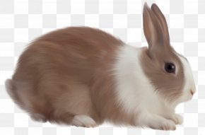 Easter Bunny - Angel Bunny Cottontail Rabbit Easter Bunny PNG