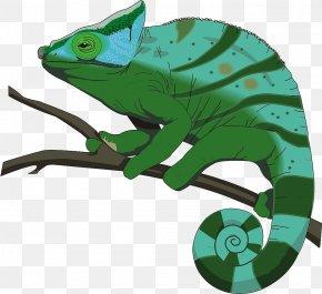 Painted Green Chameleon - Chameleons Stock.xchng Clip Art PNG