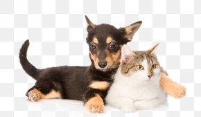 Cats And Dogs - Lancashire Heeler German Shepherd Scottish Straight Chihuahua Beagle PNG