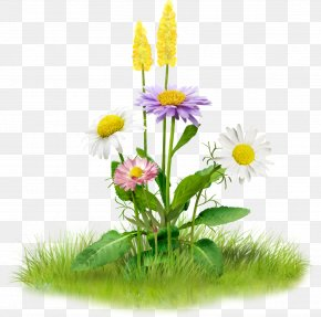 Large Spring Flowers - Image Clip Art Flower Stock.xchng PNG
