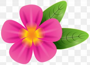 Pink Tropic Flower Clip Art Image - Frangipani Stock Photography Clip Art PNG