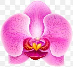Pink Orchid Clip Art Image - Clip Art PNG