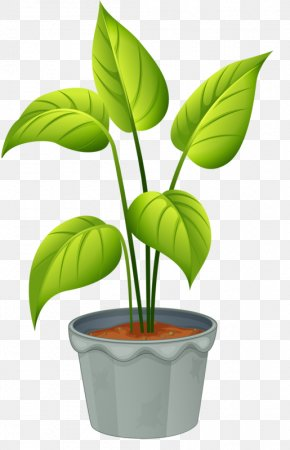 Potted Plant - Flowering Plant Clip Art PNG