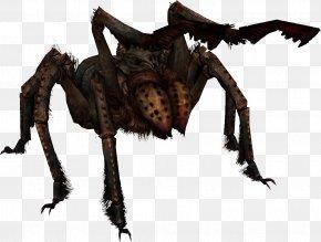Frostbite Cliparts - The Elder Scrolls V: Skyrim U2013 Dragonborn The Elder Scrolls Online: Dark Brotherhood Spider Wikia PNG