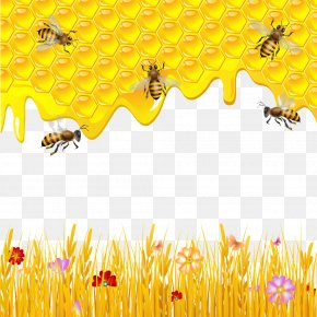 Honey And Bee Pictures - Western Honey Bee Honeycomb Drawing PNG