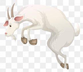 White Goat - Goat Cattle Alpine Ibex Illustration PNG
