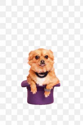 Creative Dog - Dog Breed Puppy Companion Dog Creativity PNG