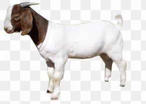 Goat - Goat Sheep Clip Art PNG