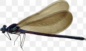 Dragonfly - Dragonfly Insect Clip Art PNG
