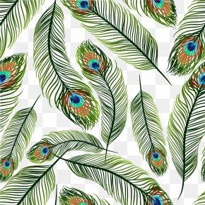 Green Peacock Ling Vector - Feather Peafowl Euclidean Vector Clip Art PNG