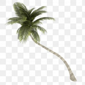 Coconut Tree Transparent Background - Coconut Arecaceae Tree PNG