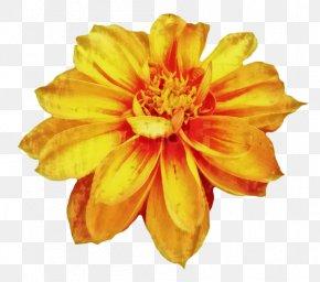 Clip Art Chrysanthemum Drawing Image Flower PNG