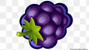 Blueberry - Fruit Blueberry Grape Clip Art PNG
