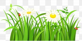 Grass With Daisies And Lady Bugs Clipart - Clip Art PNG