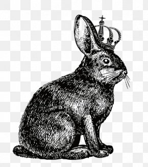 Crown Rabbit - Hare Rabbit Show Jumping Drawing PNG