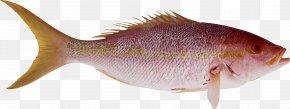 Fish - Fish ICO PNG