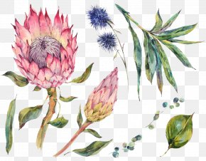 Watercolor Flowers - Watercolor Painting Stock Photography PNG